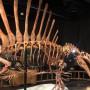 00. spinosaurus